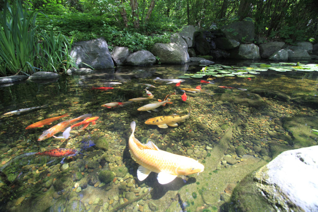 Pond-Maintenance Basics For Recreational Fish Ponds